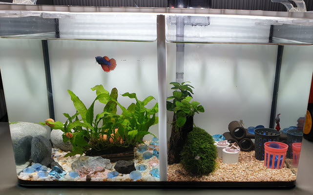 finished aquarium